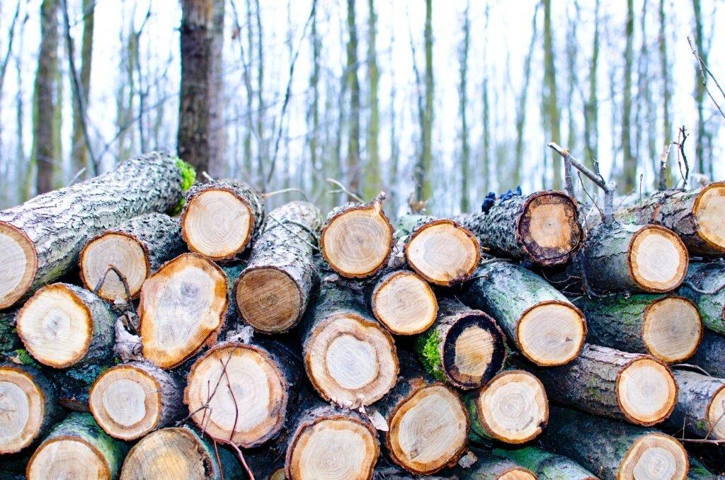 branża drzewna - dotacje z ZUS